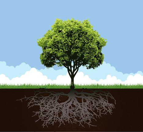 Oak Tree Cartoon Cartoon Oak Tree With Roots