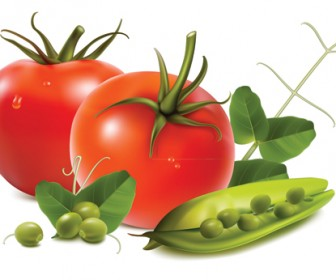 Tomatoes Vegetables Vector