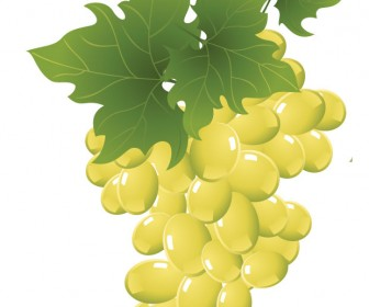 Green grapes vectorart
