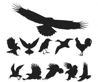 Birds Pack