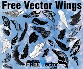 Free Wing Vector Illustration