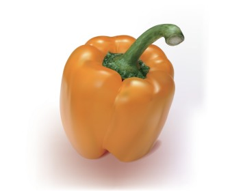 Orange Pepper Fruit Vector Illustration