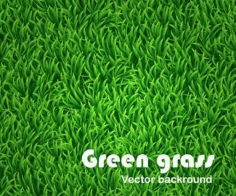 Green Grass Vector Background Background Vector Art