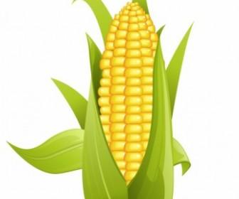 Vector Corn Nature Vector Graphics