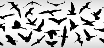 Vector Flying Birds Animal Vector Graphics