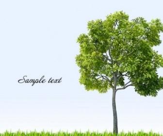 Vector Big Trees 04 Vector Art