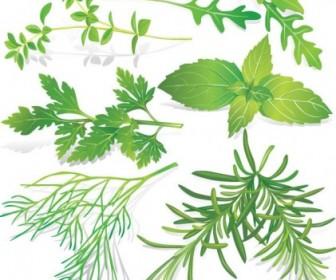 Vector Herbal Leaves 05 Vector Art