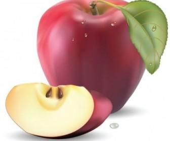 Vector Realistic Fruit 05 Nature Vector Graphics