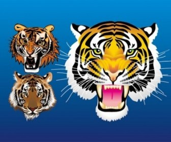 Vector 3 Tiger Head Animal Vector Graphics