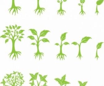 Vector Growing Tree Plant Vector Graphics