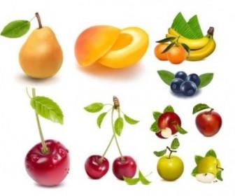 Vector Ai Drawing Lifelike Fruits Vector Art