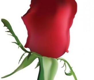 Vector Rose Vector Art