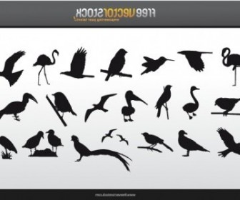 Vector Collection Of Birds Silhouettes Animal Vector Graphics