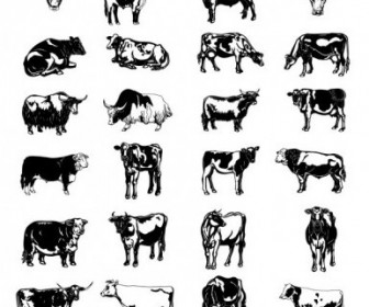 Vector Black And White Picture Series Of A Painted Cow Vector Art