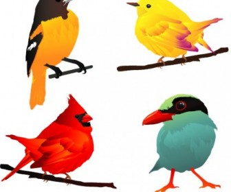 Vector 4 Beautiful Birds Animal Vector Graphics