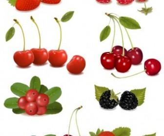 Vector Delicious Fruit 01 Vector Art