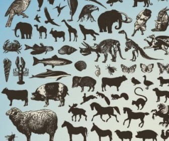 Sketch Animals Vector