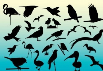 Vector Bird Silhouettes Collection