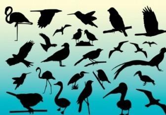 Vector Bird Silhouettes Collection
