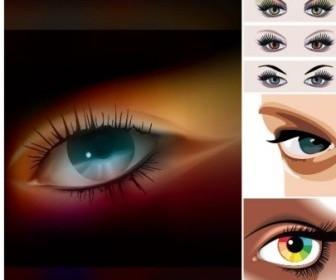 Women Eyes Vector Realistic