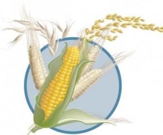 Corn Wheat Vector
