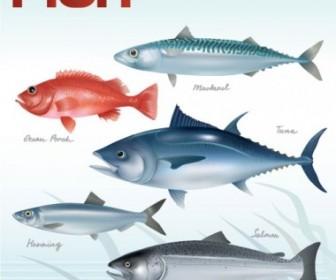 Vector Fish 01 Animal Vector Graphics