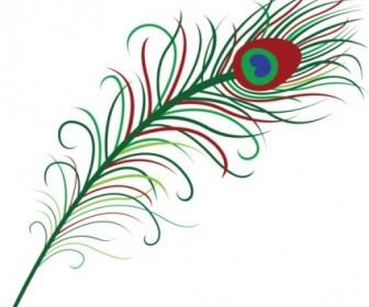 Vector Peacock Feather Vector Art