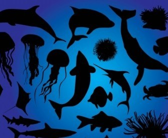 Vector Sea Life Vector Art