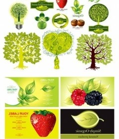 Vector Plant Fruit Theme Vector Art