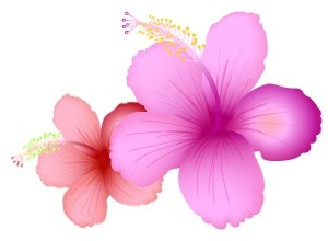 Vector SummerFlower Nature Vector Graphics