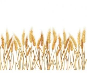 Vector Yellow Wheat 02 Vector Art