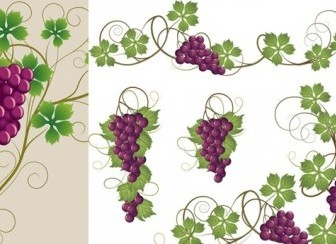 Vector Purple Grapes And Grape Leaves Vector Art