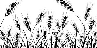 Vector Wheat Silhouettes Material Tree Plant Vector Graphics
