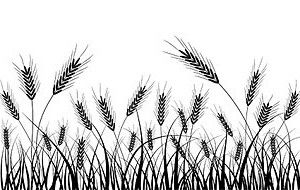 Vector Wheat Silhouette Silhouettes Vector Graphics