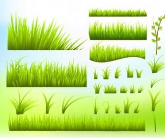 Green Grass Vector Illustration