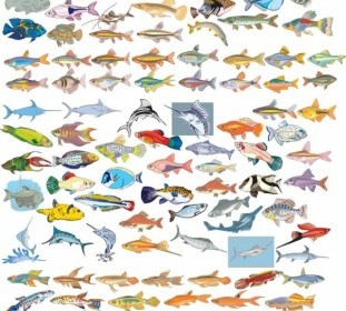 Collection Of Different Fish Vector