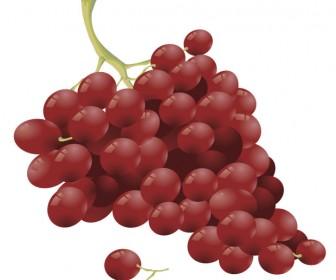 Grape vector art