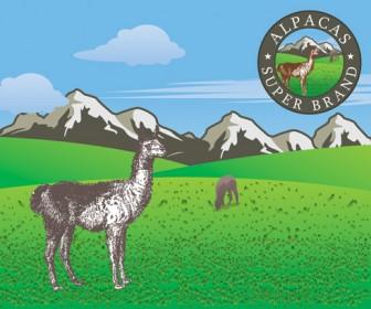 Alpaca on Grassland