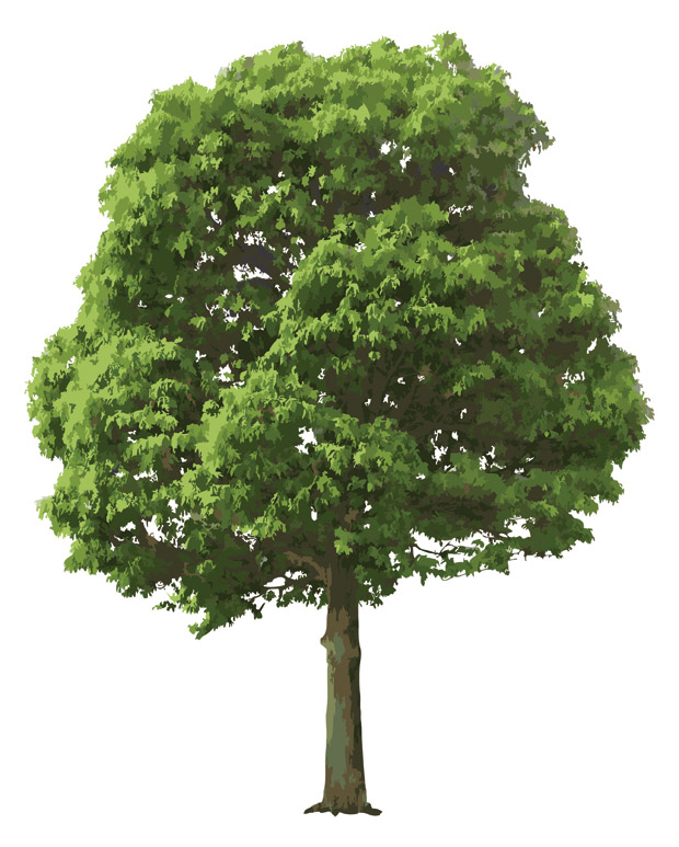 Realistic Tree Vector Ai Svg Eps Free Download