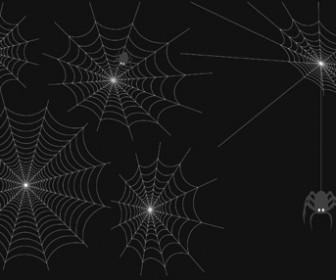 Spider Cobweb Vector