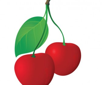 Cherries Vector Illustration