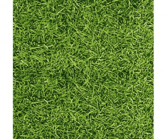 Realistic Grass Vector