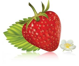 Realistic Strawberry Vector