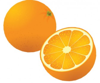 Oranges vector art