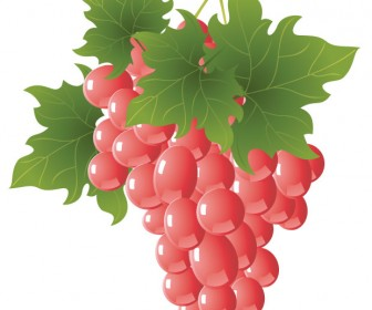 Grapes vector art