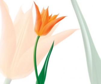 Vector Tulip Orange