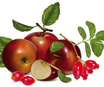 stock_vector_Fruits_red_apple