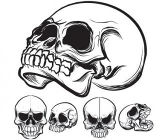 Vector Stock skull