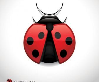 Vector Ladybug Ladybird
