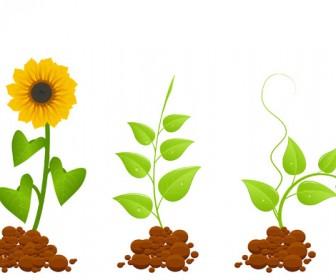 Eco Flower Plants Vector Graphic